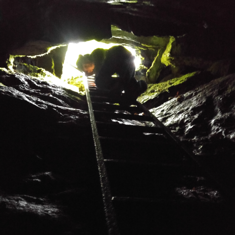 The Hell Hole can only be accessed by climbing down a ladder, taking you 7.5 metres below the forest floor. Photo: Jen Pinarski